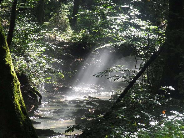 """ALT""""Bach im Wald"""""""