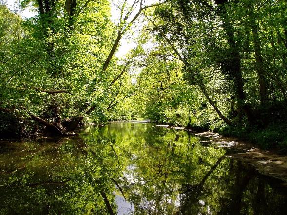 """ALT""""Flusslandschaft"""""""